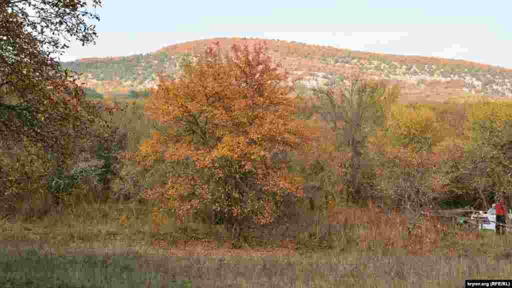 Типове осіннє дерево в тому ж лісі