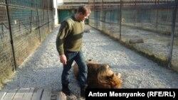 Олег Зубков спокойно заходит в клетку со львами