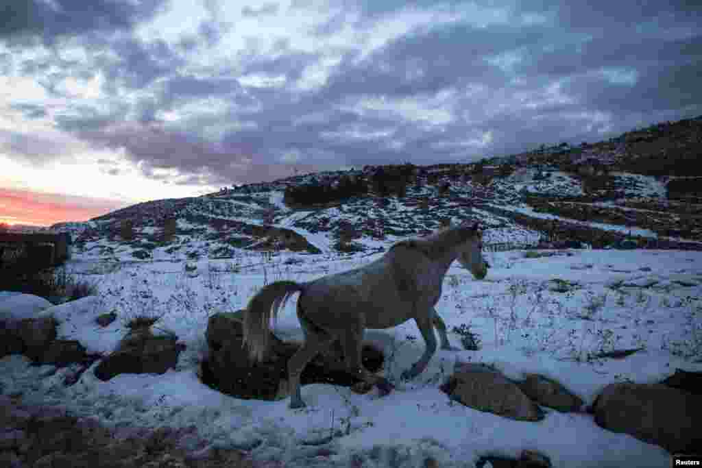 A horse walks in the snow at the base of Mount Hermon in the Golan Heights near the Israel-Syria border on December 17. (Reuters/Nir Elias)