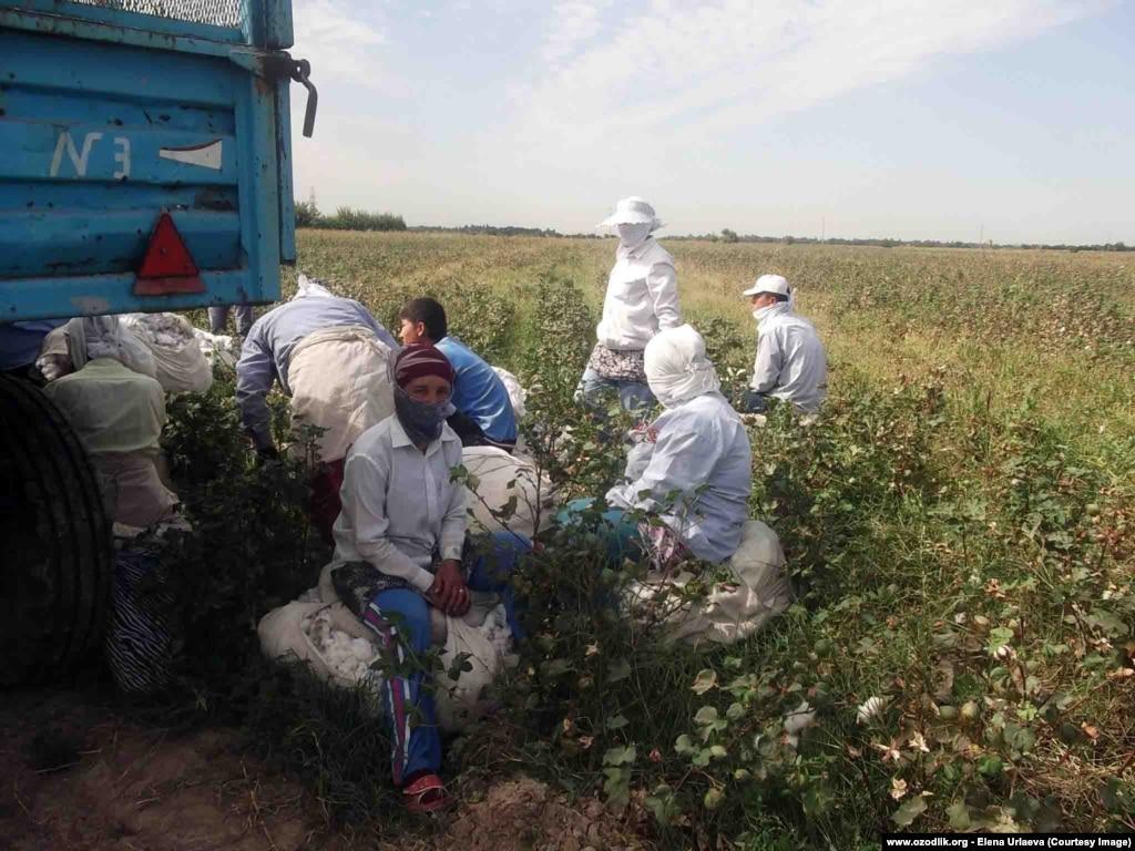 Узбекистан секис видо 24 фотография