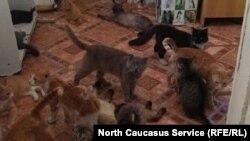 Кошачий приют в Махачкале