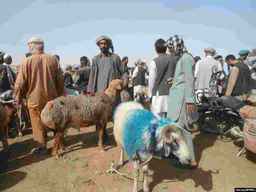 Sheep, cows, and camels are decorated for the holiday in Afghanistan's Jawzjan Province.