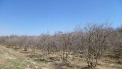 'د بلوچستان ۱۶۰۰ مېګاواټه بجلي پکار ده ورسېږي څه کم ۱۰۰۰ مېګاواټه'