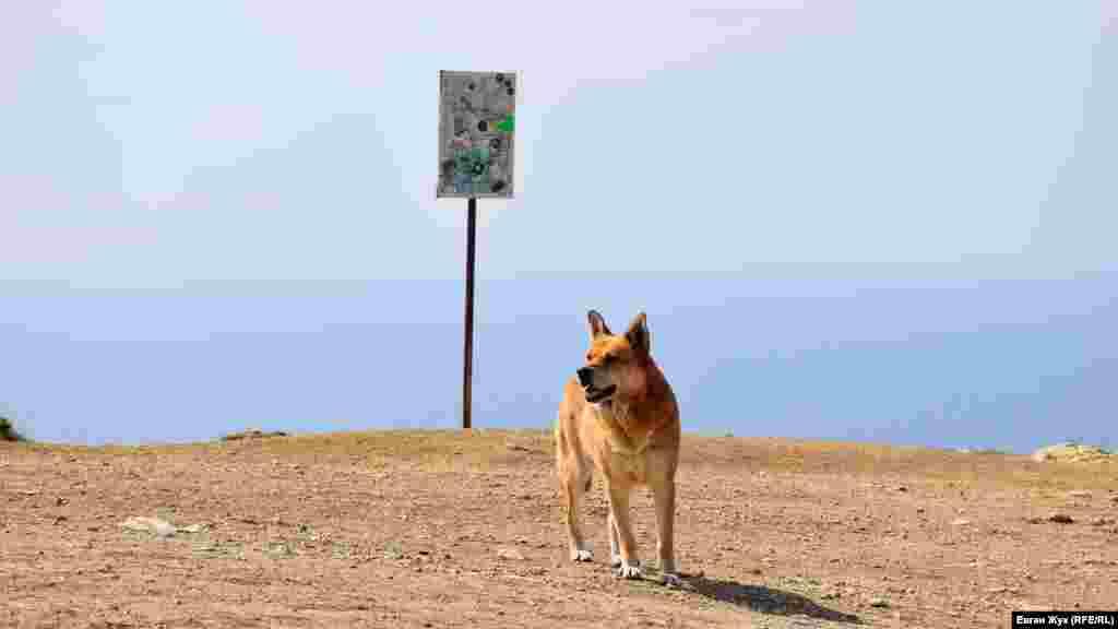 Суровый дачный пес прогуливается вдоль обрыва на мысе Лермонтова в Севастополе