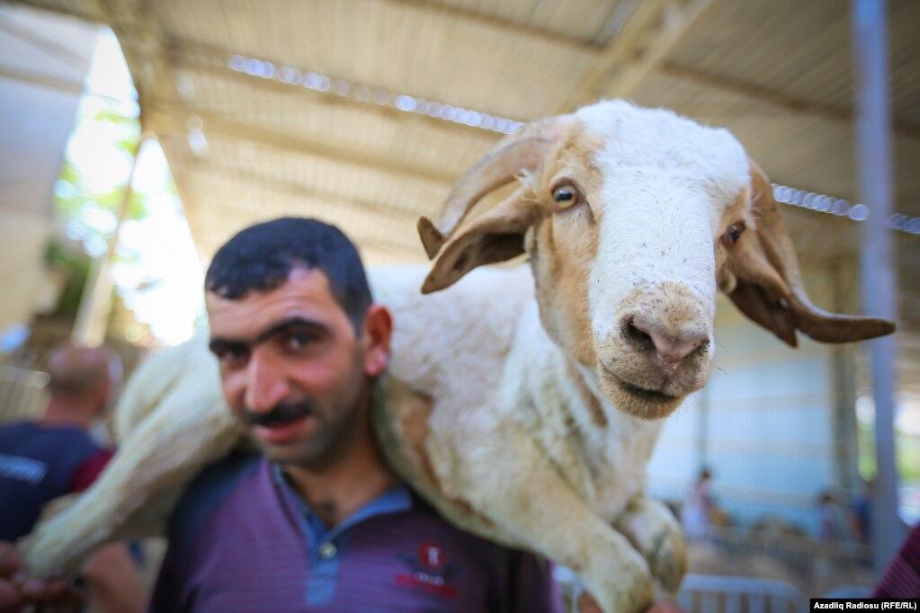 Азербайджанские мусульмане отмечают Праздник жертвоприношения, во время которого режут на жертву овцы и другое животное;  22 августа.