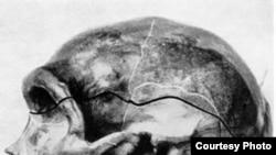 Реконструкция черепа неандертальца, найденного в Германии в долине Неандерталь около Дюссельдорфа.