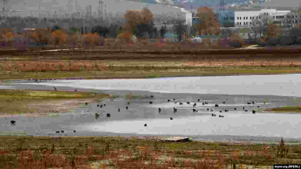 Компанию одиноким любителям рыбалки составляют птицы