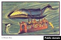 Əhliləşdirilmiş balinaya qoşulan su avtobusu