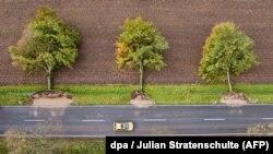 Ilustrim nga erërat e mëparshme të fuqishme në Gjermani nga të cilat janë çrrënjosur drunjtë
