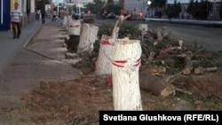 Срубленные деревья на улице Бейбитшилик. Астана, 19 июля 2012 года.