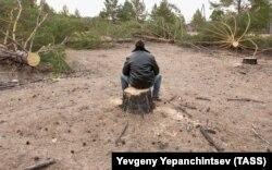 Рубка и вывоз леса в Читинской области