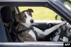 Foto në kuadër të një fushate për adoptimin e qenve në Zelandë të Re.