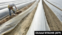 Գերմանիա - Սեզոնային գյուղատնտեսական աշխատանք Բավարիայում, արխիվ