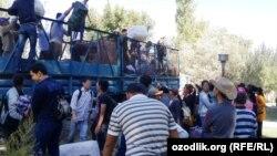 Студенты и сотрудники из Самарканда, приехавшие на уборку хлопка. Сентябрь 2015 года.