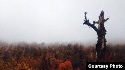 Персидская осень