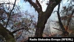 Архивска фотографија - Пожар на Галичица