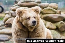 Ведмедиця Христина працювала у цирку