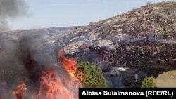 Пожар на пастбище Алмалуу в Таласской области, 7 августа 2018 г.