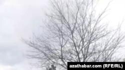 На Ашхабадских мусорках все больше копающихся в отходах людей