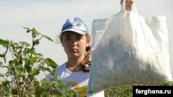 Мақта алқабында жұмыс істеп жүрген өзбек қызы. Қыркүйек, 2010 жыл.