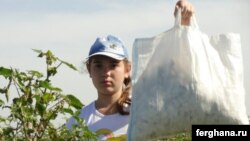 A girl picks cotton in Uzbekistan's Tashkent Province in September 2010. The ILO monitors will be looking for signs of forced or child labor.