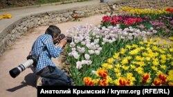 На експозиційній ділянці – понад 73 тисячі тюльпанів на різній стадії цвітіння