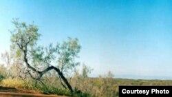 Биргина Қорақалпоғистонда кейинги 20 йил давомида ерларнинг ярмидан кўпи чўллашиб бўлган.
