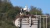 Mladunčad roda o kojima se brinu ornitolozi u Podgorici nakon nestanka njihovih roditelja