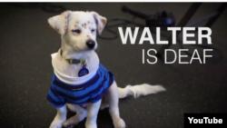 Belarus - deaf dog and gitl, Youtube