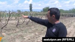Armenia - A farmer in Mrgashat village points to his vineyard destroyed by a powerful hailstorm, 13May2013.