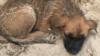 Бездомная собака (архивное фото)