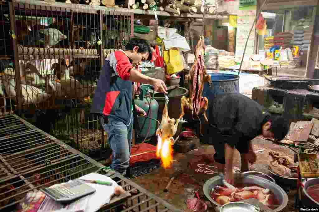 Продавці готують до продажу м'ясо курей і собак на «мокрому ринку» в китайській провінції Юньнань, гуси в клітці чекають на свою чергу. Віруси можуть передаватися від тварин людям через вдихання повітря, яке видихають тварини, вживання їжі, забрудненої екскрементами тварин, або обмін тілесними рідинами – як це може статися, коли м'ясник працює з порізом на руці