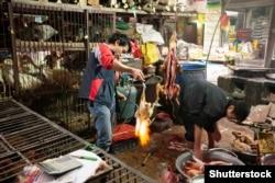 Один из «мокрых рынков» в Китае.