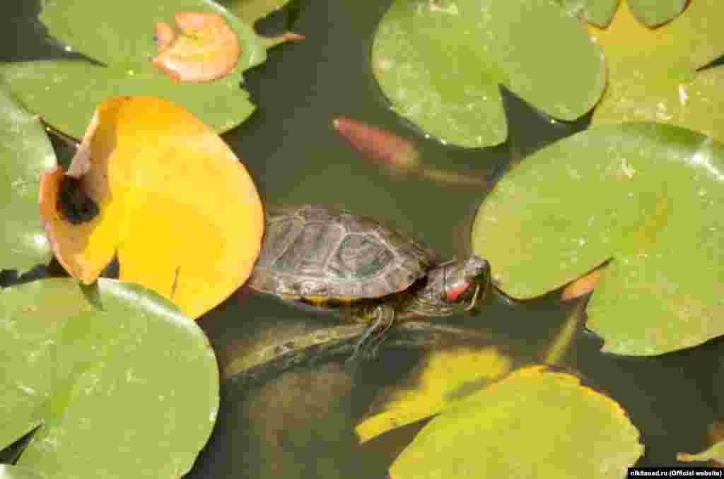 В ботаническом саду можно встретить и маленькую черепашку