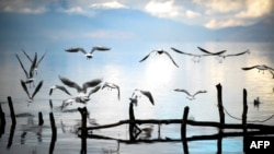 Seagulls fly over Lake Ohrid near the Macedonian city of Ohrid. (AFP/Armend Nimani)