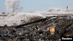 Місце катастрофи малайзійського літака на Донбасі, 15 грудня