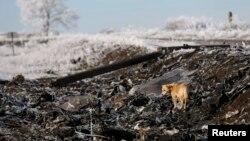 На месте крушения MH17 в Донбассе