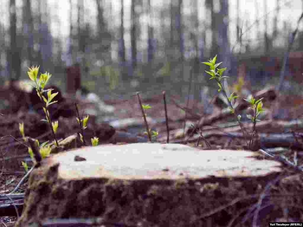 Остатки Химкинского леса