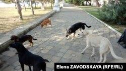 Psi lutalice, fotoarhiv