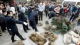 Паліцыя канфіскоўвае вівэравых катоў на рынку ў Гуанчжоў у Кітаі (архіўнае фота)
