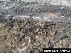 Петропавл қаласындағы Береке шағын ауданында жылу құбырын тарту үшін жер қазғанда табылған сүйектер. 2016 жылдың жазы.