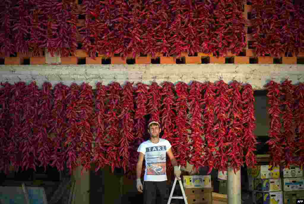 A farmer poses near his threads of red paprika in the village of Donja Lokosnica, near the southern Serbian city of Leskovac. (AFP/Andrej Isakovic)