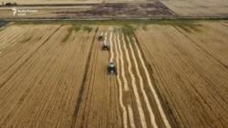 Kosova përsëri e varur nga importi i grurit