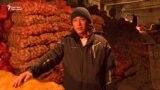 Ысык-Көл: картошка кампадан чыкпай турат
