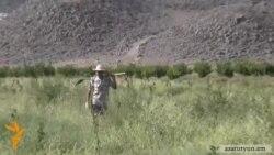 «Հայկական միրգը» արժանահավատ չի համարում ՎՊ-ի բացահայտումները