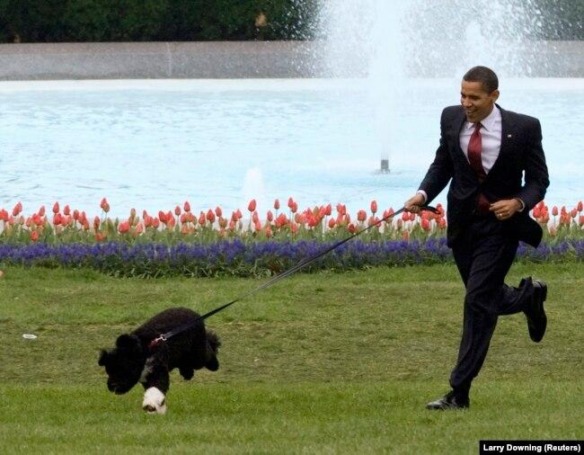 44-й президент США Барак Обама неожиданно стал жертвой дипфейка