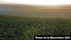 Regiunea din estul Franței, în apropriere de Reims. Aici crește vița de vie a producătorului Veuve Clicquot Ponsardin din Saint Thierry. Doar departamentele Aube, Marne, Haute-Marne și Ardennes sunt recunoscute drept făcând parte din regiunea Champagne.