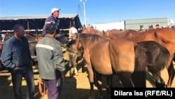 Часть рынка, где продают лошадей