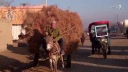 کودکان هیزم فروش در شهر شبرغان با کار های شاقه وسنگین مواجه اند