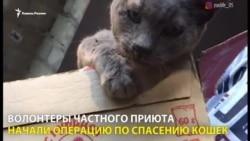 50 рублей за убитую кошку, или Как зооактивисты спасали животных